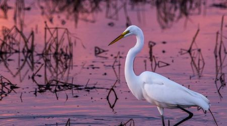 Egret at Blackwater Wildlife Refuge_Bryan Lemasters
